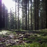 Häggsjöryr Naturreservat.