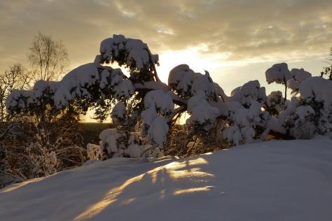 Vinterpromenix -12 3
